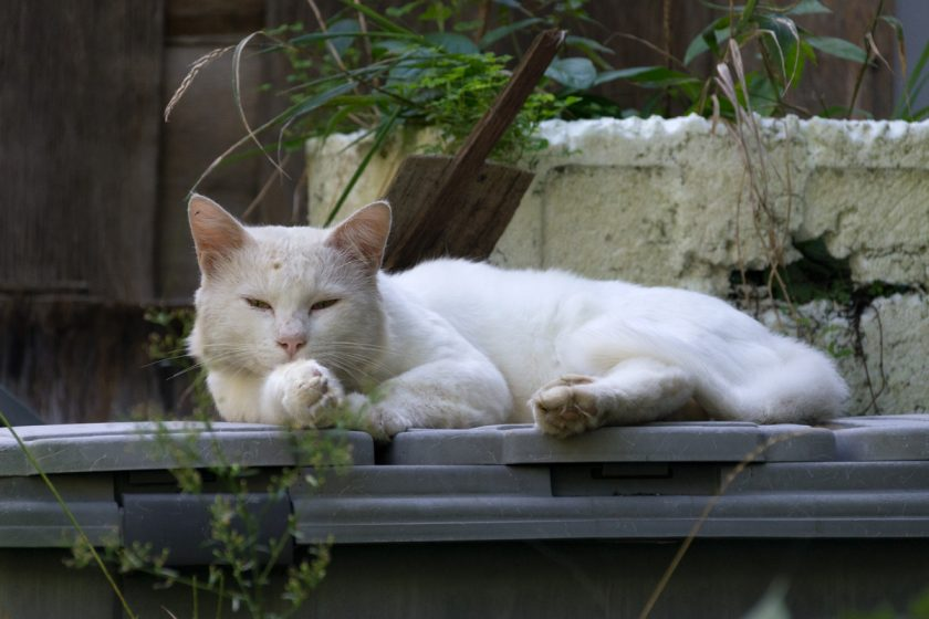 さいたま市の猫