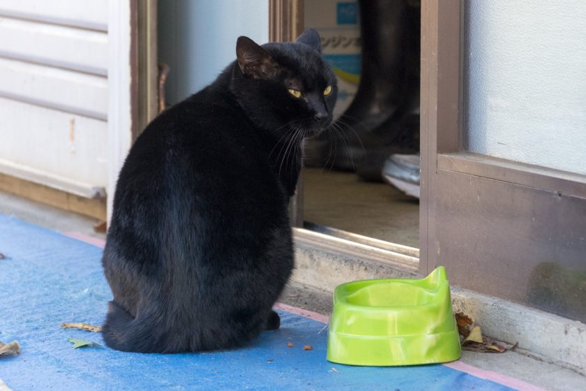 町田市の猫