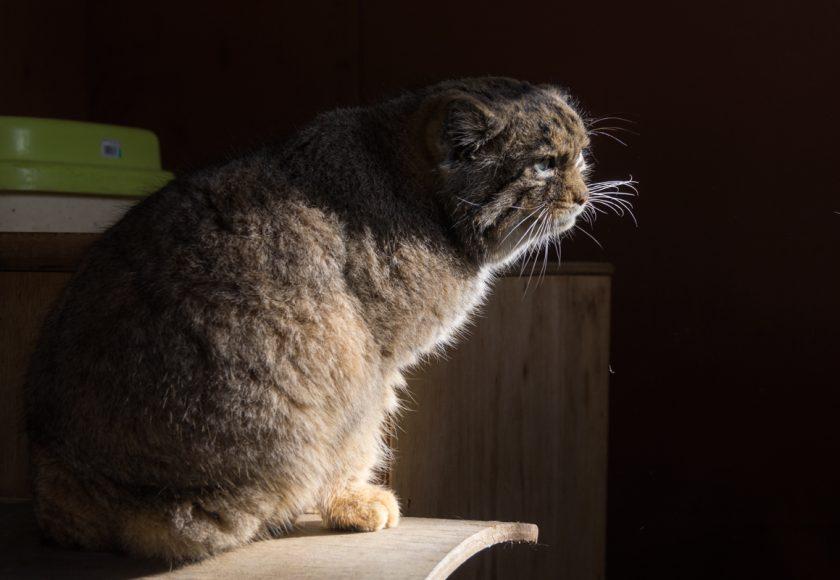 東松山市の猫
