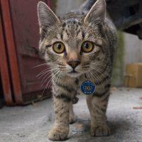 關山鎮の猫