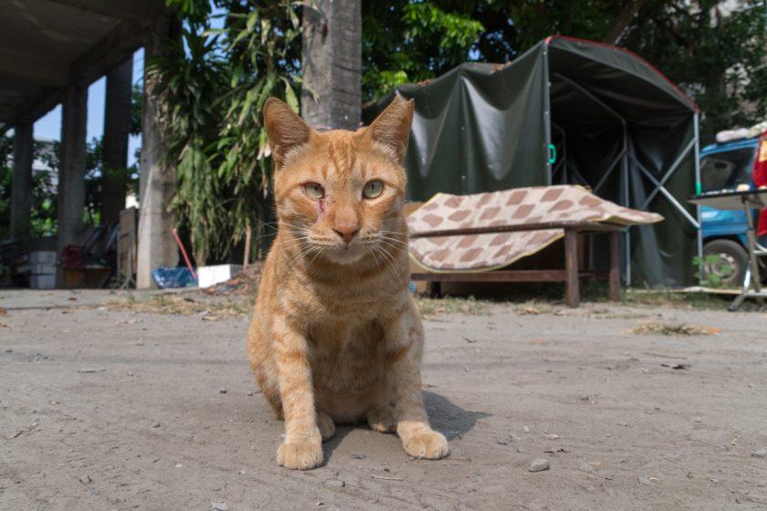 屏東市の猫
