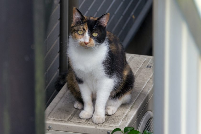 寒川町の猫