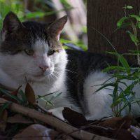 大田区の猫