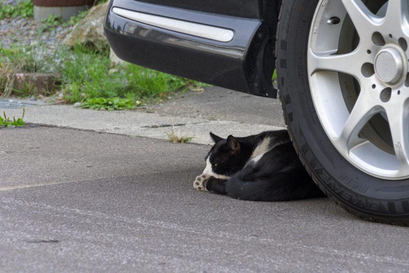 北斗市の猫