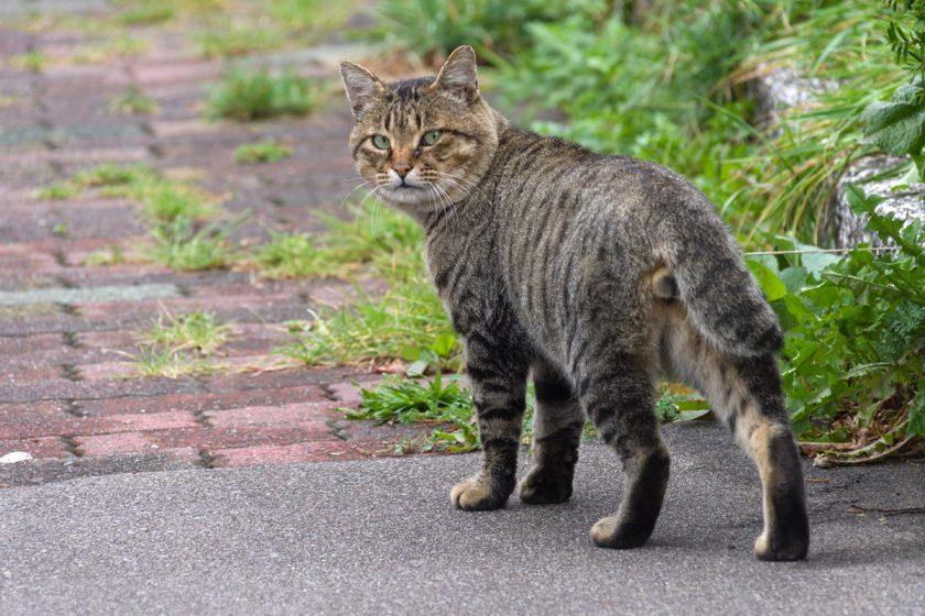 函館市の猫