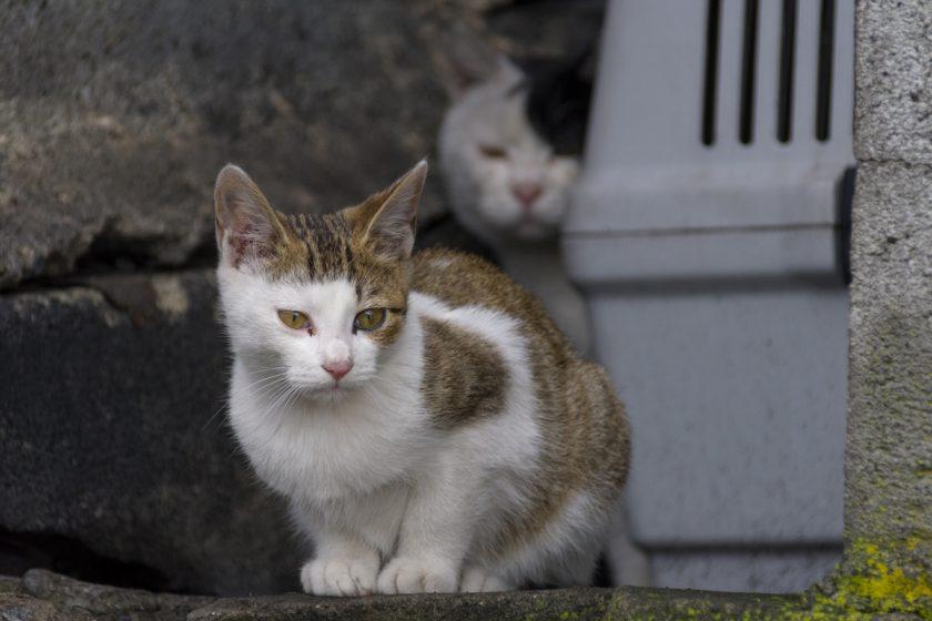 夕張市の猫