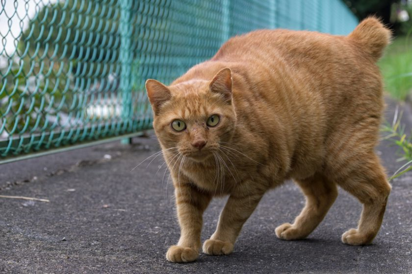 多摩市の猫