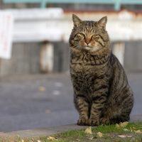 名古屋市の猫