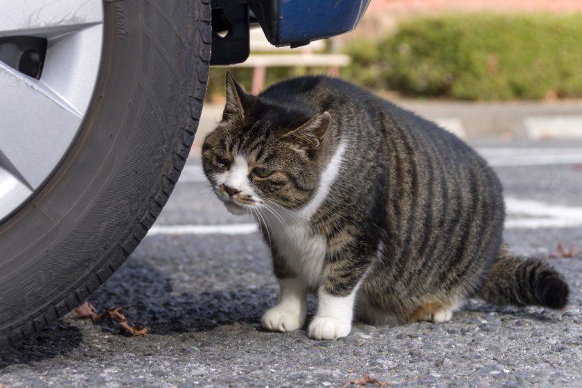 青梅市の猫