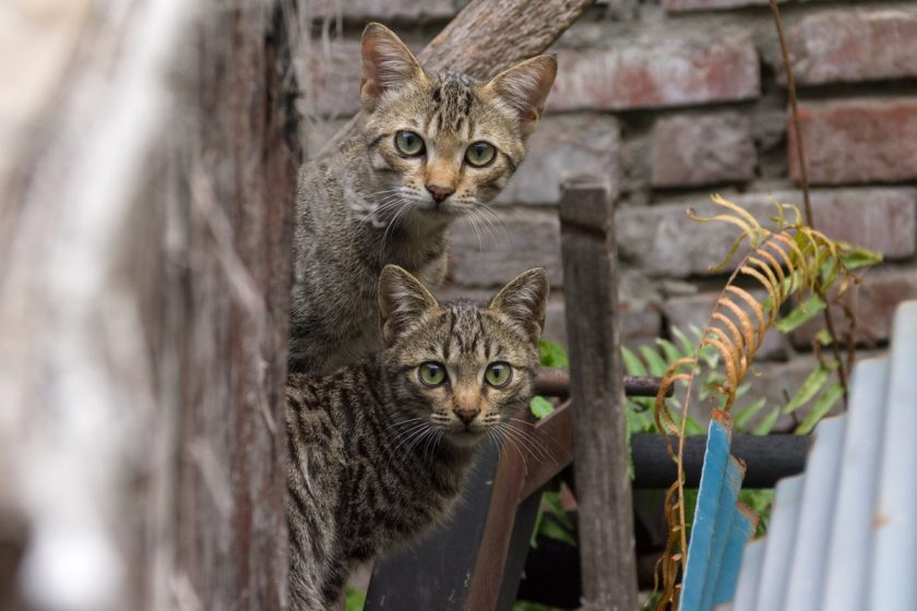 東港鎮の猫