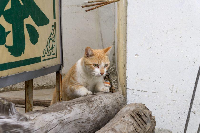 恆春鎮の猫