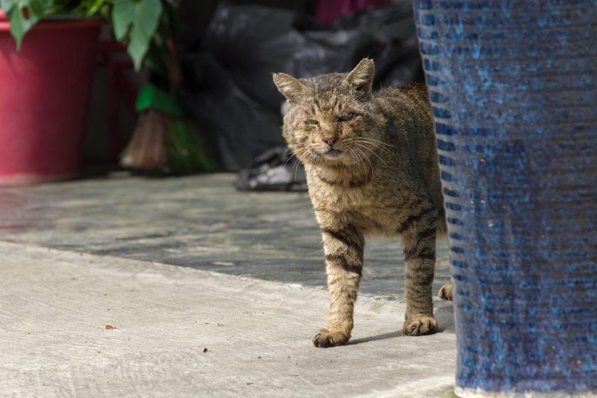 枋寮郷の猫