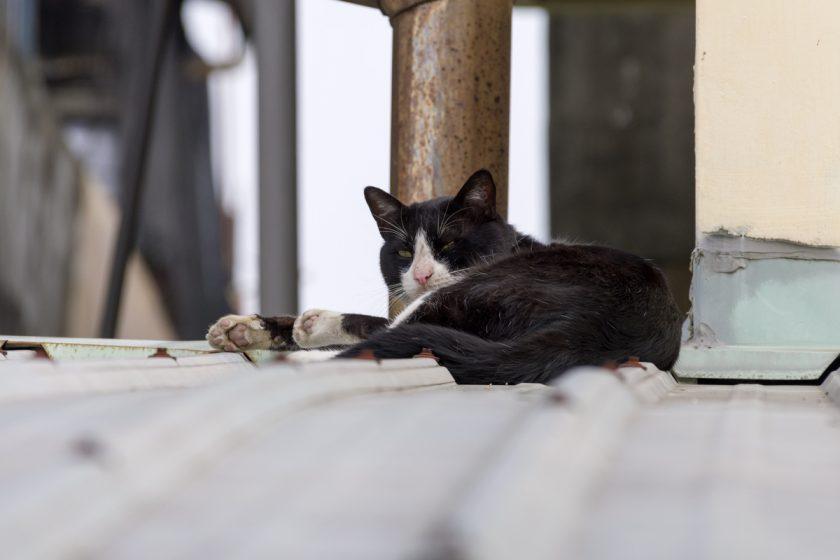 南州郷の猫
