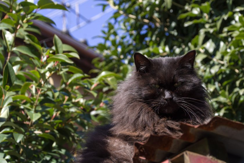 中野区の猫