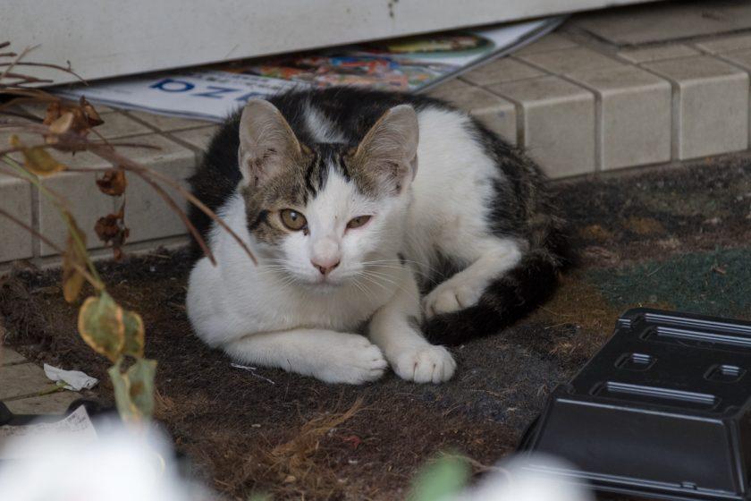 土浦市の猫