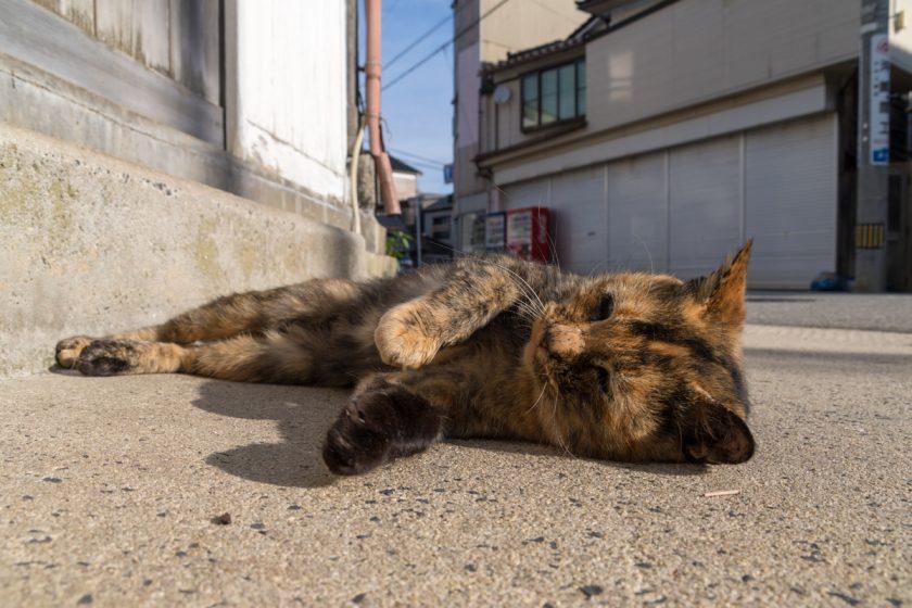 輪島市の猫