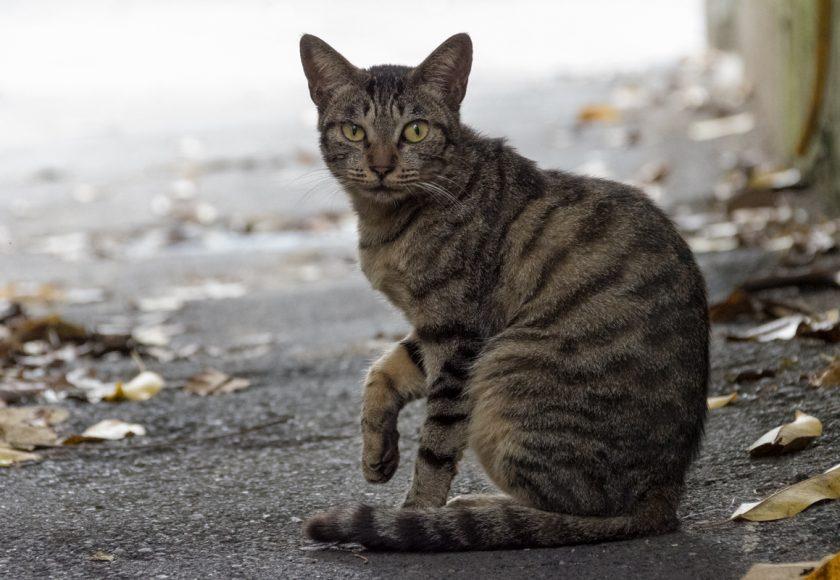 台北市の猫