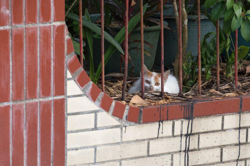 萬榮郷の猫