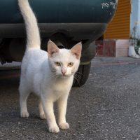 瑞穂郷の猫