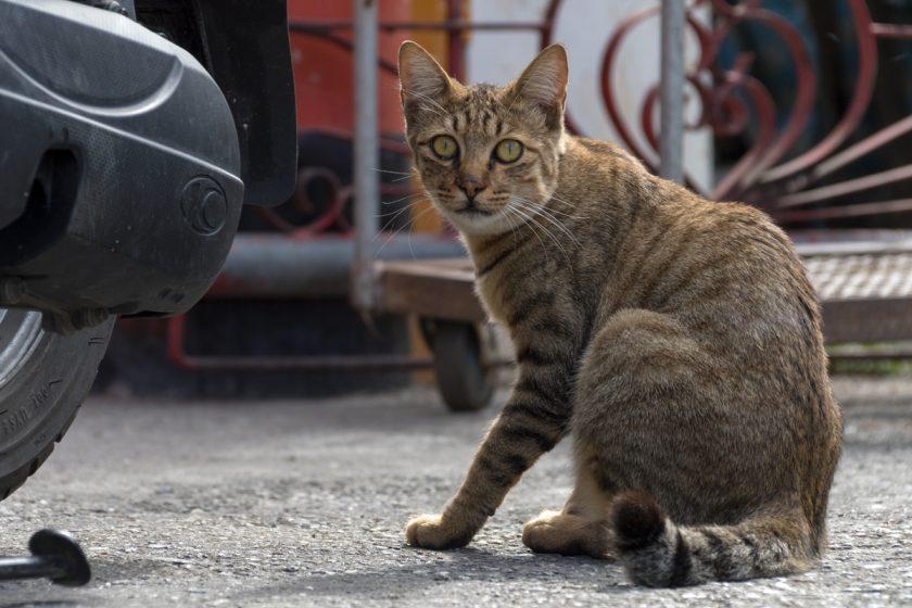 玉里鎮の猫