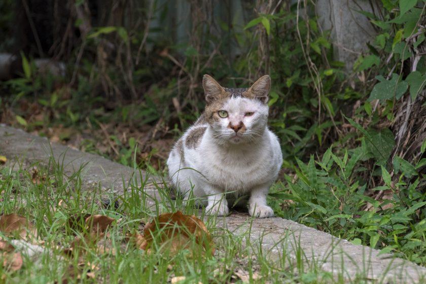 台東市の猫