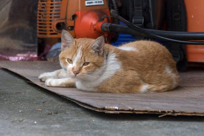 金峰郷の猫