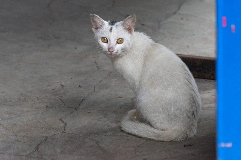 太麻里郷の猫