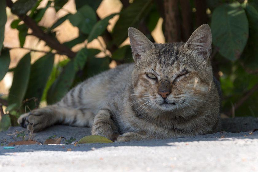 田中鎮の猫