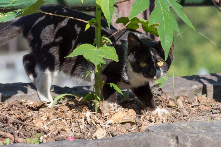 水里郷の猫