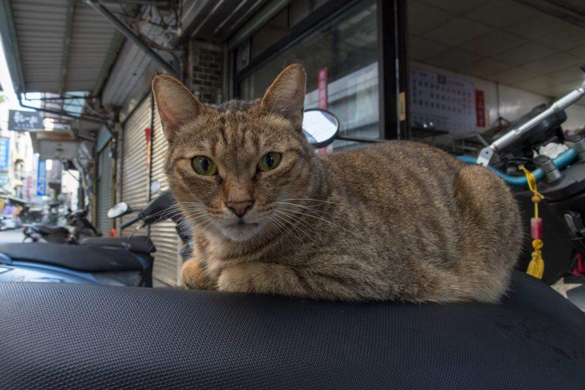 新竹市の猫