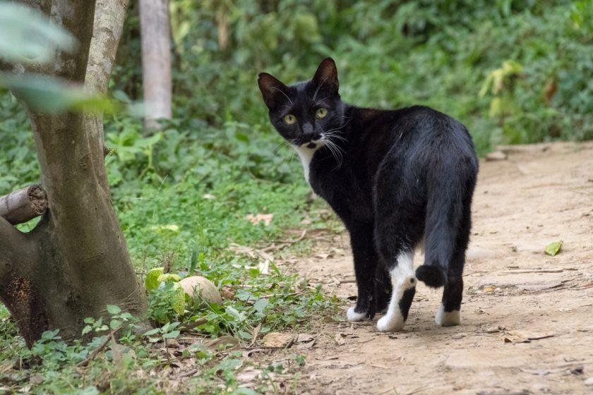 新埔鎮の猫
