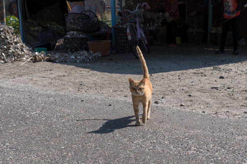 台西郷の猫