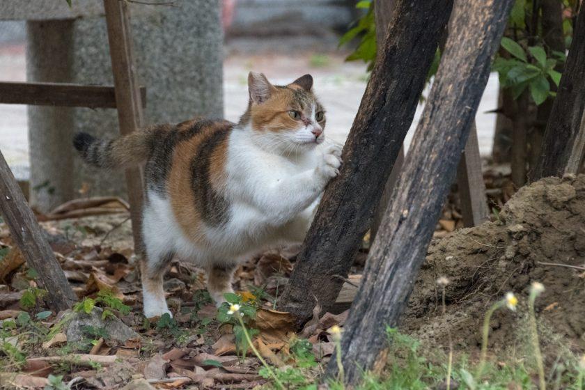 台南市の猫