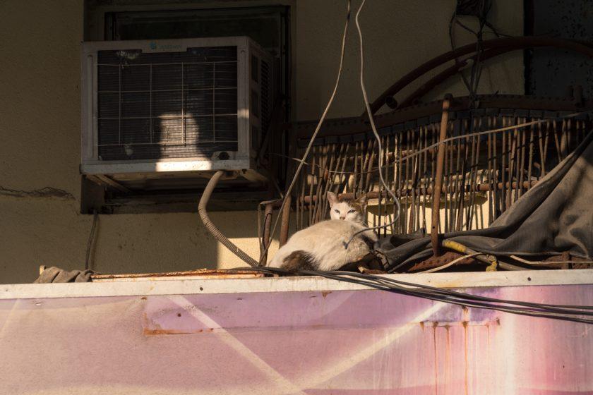 深水埗區の猫