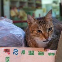 尖旺區の猫