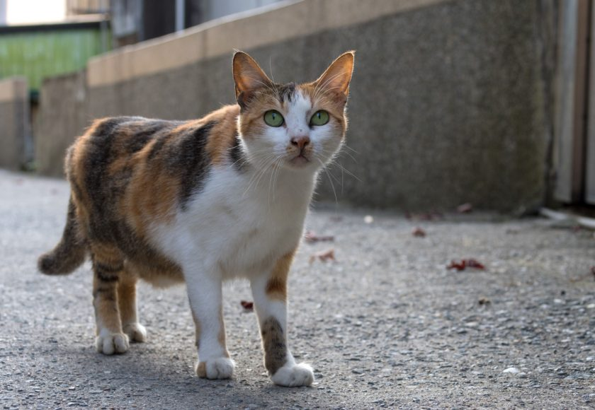 基隆市の猫