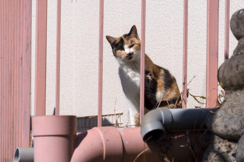 奥多摩町の猫