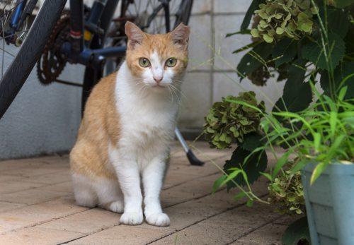 杉並区の猫