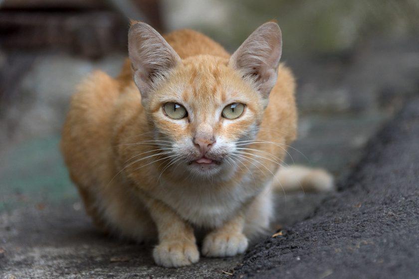 台中市の猫