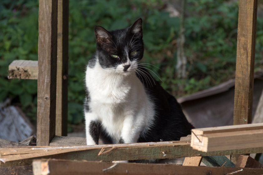 橫山郷の猫