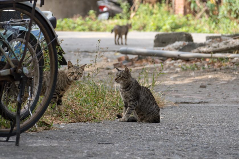 和美鎮の猫