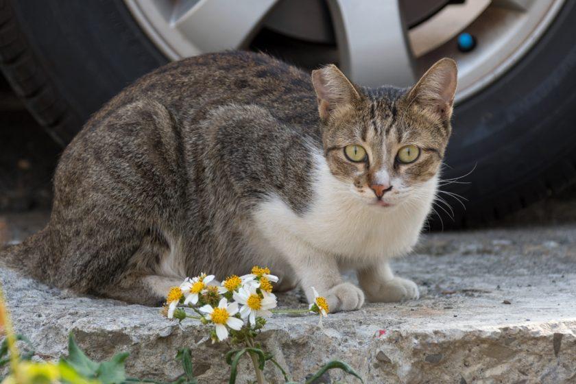 嘉義市の猫