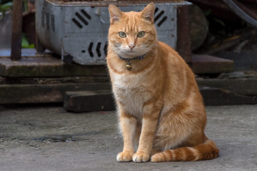 竹崎郷の猫
