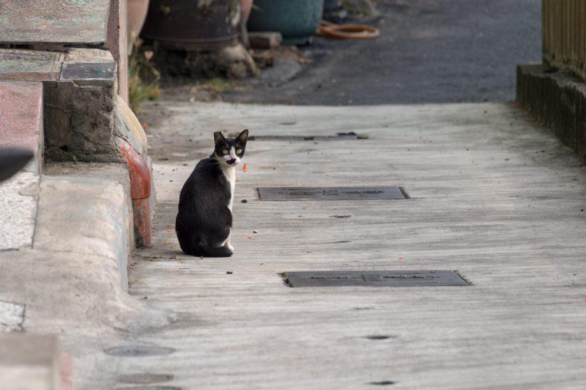 高雄市の猫