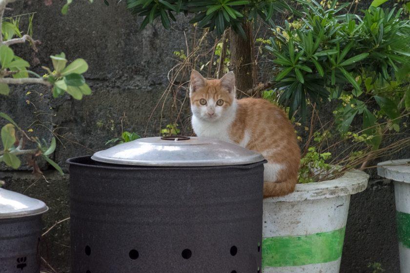 新城郷の猫