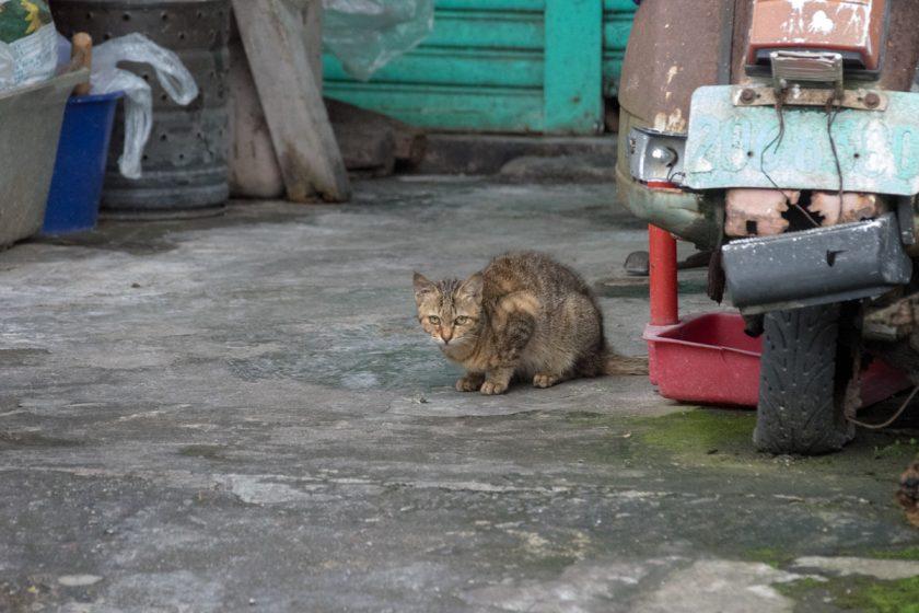 蘇澳鎮の猫