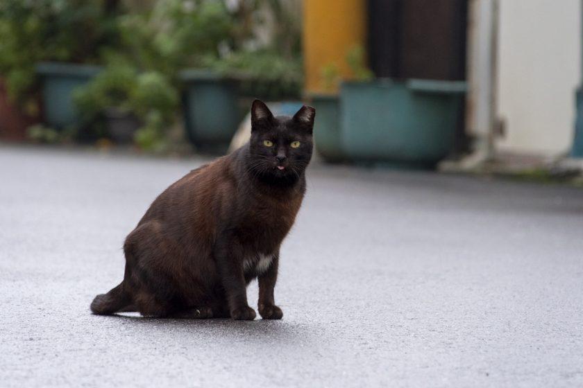 冬山郷の猫