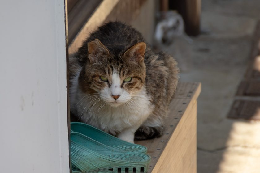 狛江市の猫