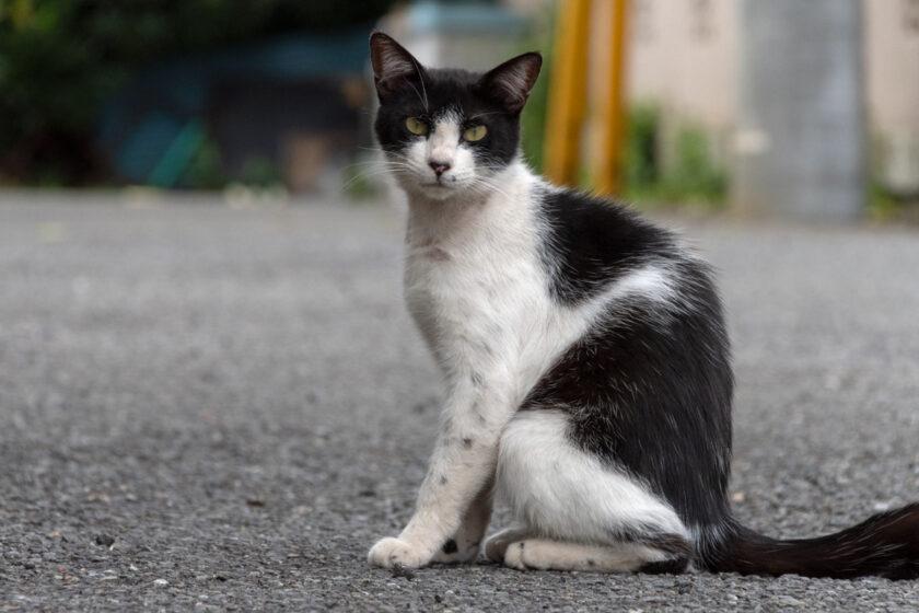 小金井市の猫