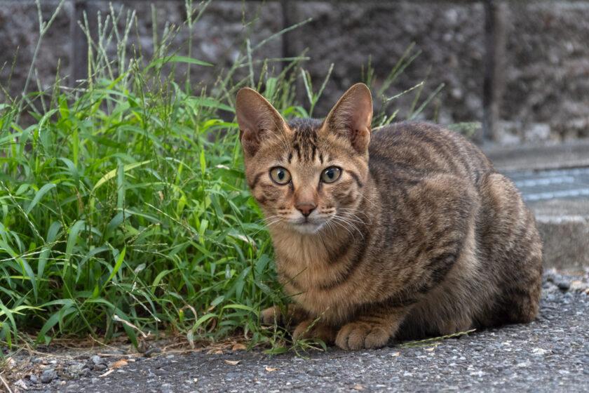 大阪市の猫